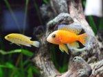 Benefits Of Keeping An Aquarium At Home