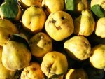 Quince Nutrition Benefits Recipes