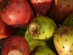 Opuntia Nutrition Benefits Recipes
