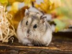 Pets That Are Banned Around The World