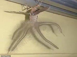 Man Finds A Bizarre Alien Like Winged Creature