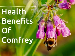 Comfrey: Health Benefits, Side Effects, Prevention And Drug Interaction