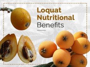 Loquat Nutrition Benefits Side Effects Recipe
