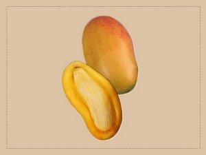 Health Benefits Of Mango Seeds
