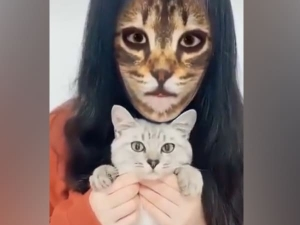Cats Shocking And Funny Reaction When They See Cat Filter On Owners Faces