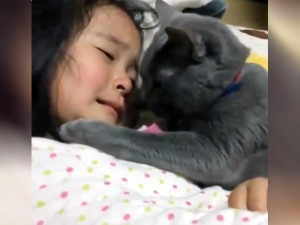 Viral Video Of Cat Comforts Crying Baby
