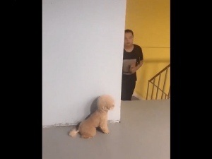 Viral Video Pup Plans Prank By Hiding Behind Wall