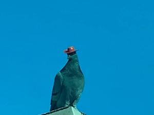 Video Of Pigeons Wearing Hats In Las Vegas Go Viral