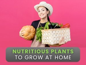 Edible And Nutritious Plants To Grow At Home