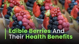 Different Types Of Edible Berries With Their Health Benefits