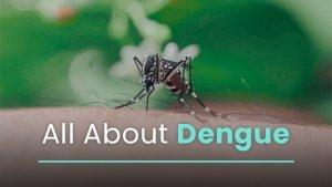 Dengue 101 Types Causes Symptoms Complications Treatments Vaccines Prevention