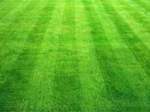 Carpeting Lawns