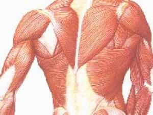 Carbon Monoxide Skeletal Muscle Injury