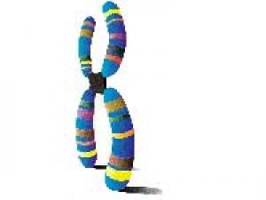 Down Syndrome Chromosome