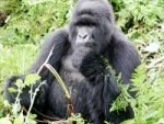 Global Warming Primates Extiction