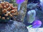 Coral Algae Global Warming