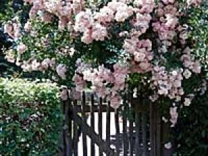 Celestial Garden Decor