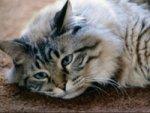 Cat Pregnancy Care