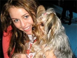 Miley Cyrus New Avatar