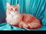 Cat Loudest Purr Records 220211 Aid