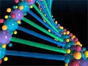 Genetic Variations Bipolar Disorder