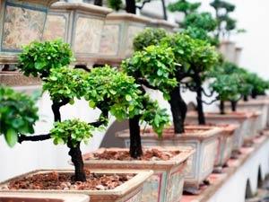 Indoor Trees Apartment Garden