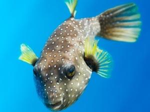 Lucky Fish Good Luck