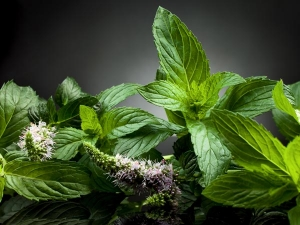 Skin Benefits Of Peppermint