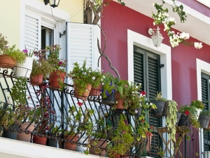Best Potted Plants For Balcony Garden