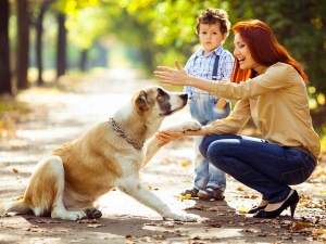 Break These Myths About Dog Food