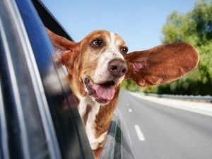 Pet Dog Traveling Tips