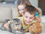 Strange Facts About Pet Cat