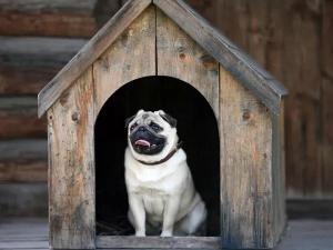 Ways Control Barking Dog
