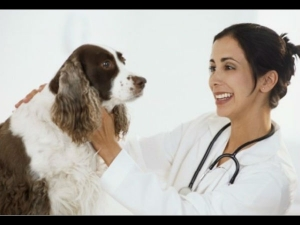 Five Signs To Tell If A Dog Is Sick