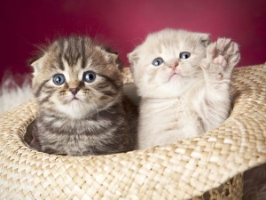 Common Ailments In Cats And Methods To Tackle Them