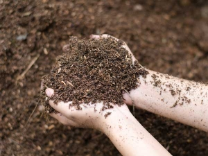 Simple Ways To Improve Soil In Your Garden
