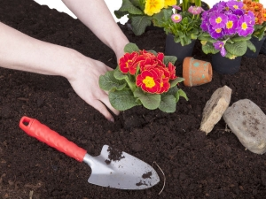 Simple Gardening Tips For Looking After Flowers In Wint