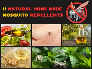 Natural Homemade Mosquito Repellents