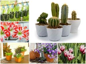 Do It Yourself Fifteen Indoor Garden Plant Ideas