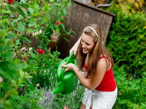 Ten Tips To Care For House Plants
