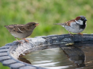 How To Build Bird Bath In Garden
