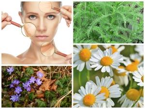 Skin Benefits With Wild Plants