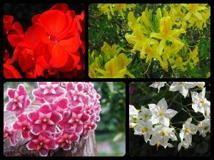 Best Aromatic Plants For Home