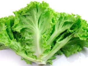 Health Benefits Of Lettuce In Pregnancy