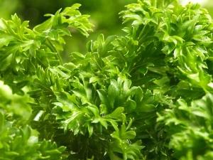 Herbs To Grow In Pots