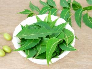 Top Ten Benefits Of Neem Powder For Health