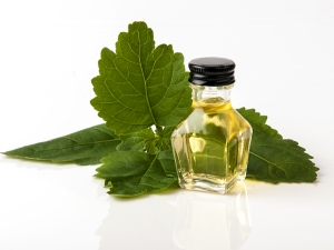 Is Patchouli Oil Safe For Your Skin Seven Things You Should Know