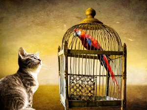 Did You Know That Caging Of Birds Leads To Financial Loss