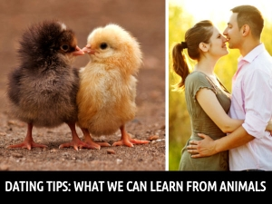 Dating Tips We Can Take From Animals
