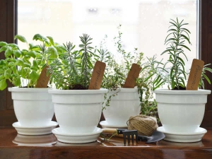 Herbs That Can Repair Lung Damage Combat Infections And Boost Lung Health